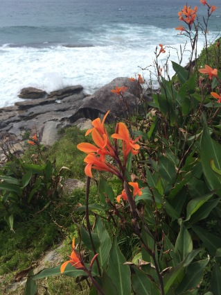 Gorgeous wild flowers along the path to Bondi.