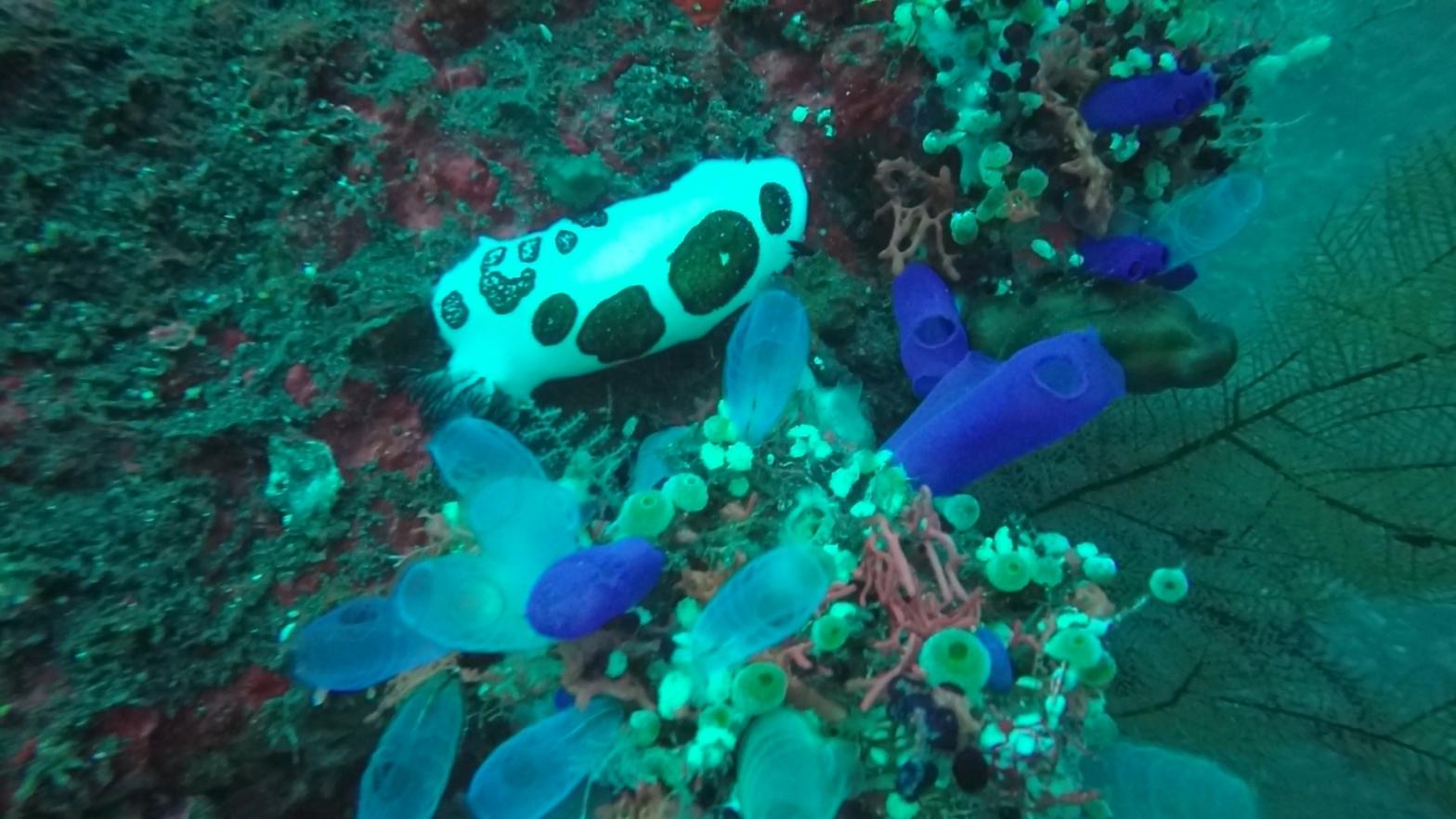 Nudibranch at Tulamben Bay Dive Site Bali