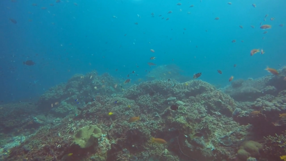 Crystal Bay Scuba Diving Bali Reef Fish