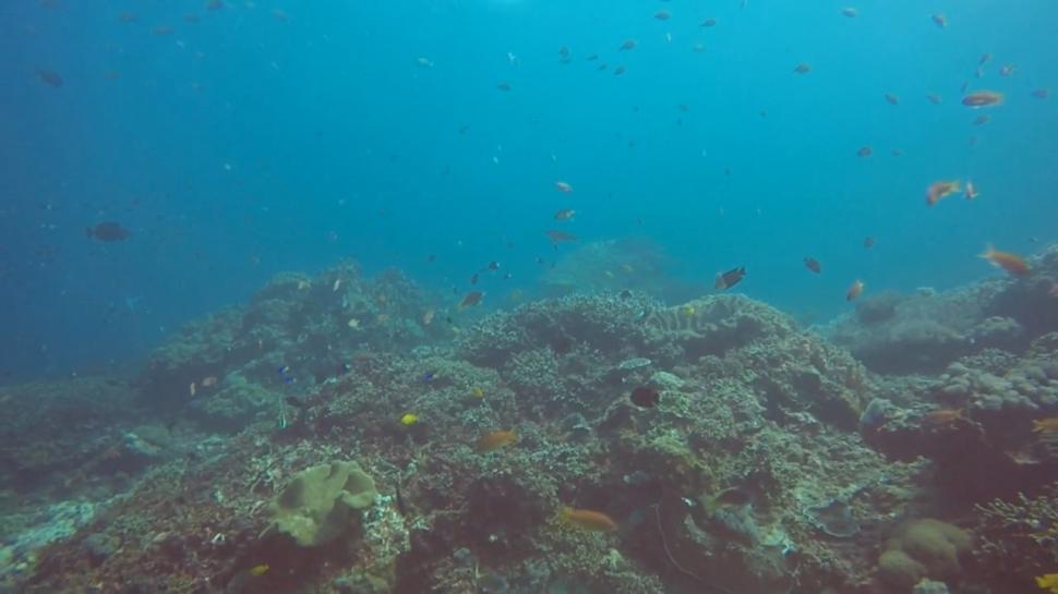 Crystal Bay Scuba Diving Bali Reef Fish