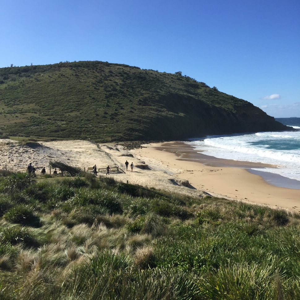 Era Beach has an aboriginal shell midden sectioned off as you meander past.
